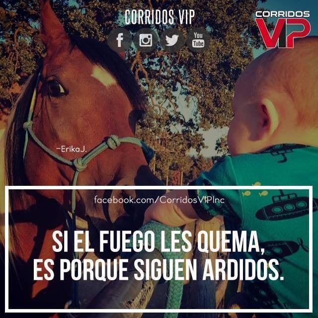 Corridos Vip Quotes De Desamor 41370 Movieweb