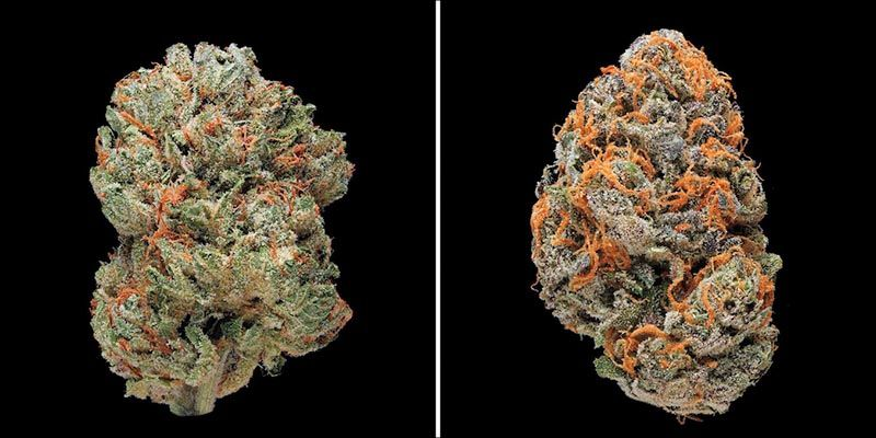Cannabis Strains Database | Cannabis, Weed strains and Buy weed
