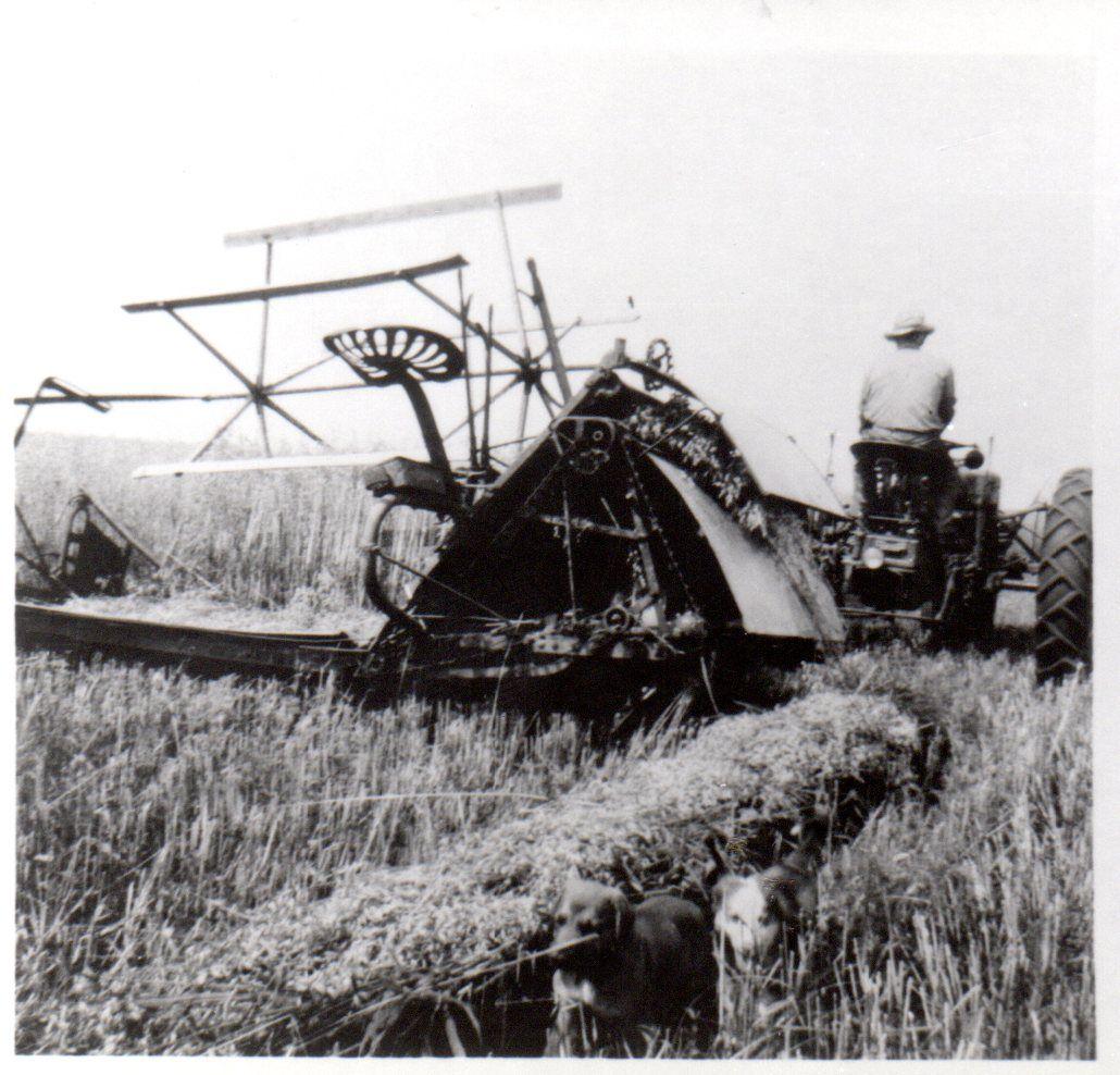 Deering And McCormick Grain Binders
