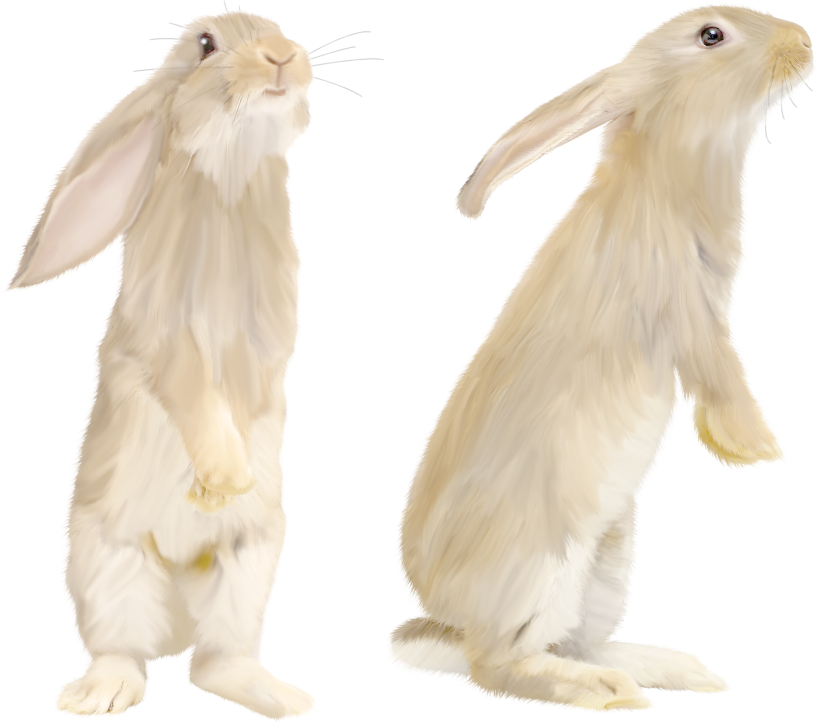 White rabbit PNG image image with transparent background