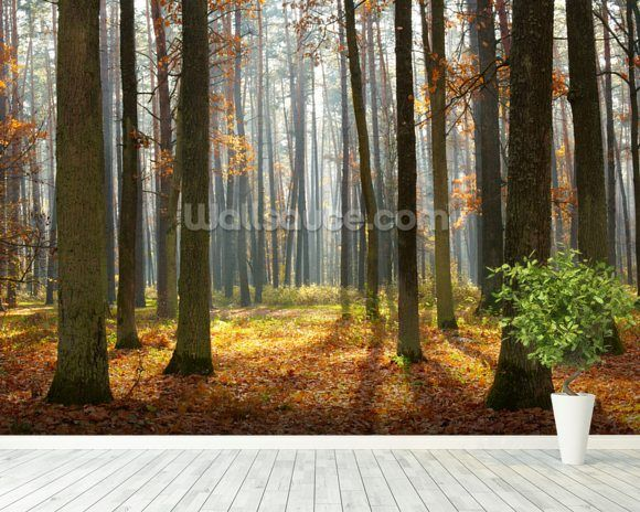 Autumn Forest Wall Mural Autumn forest Wall murals and Forest