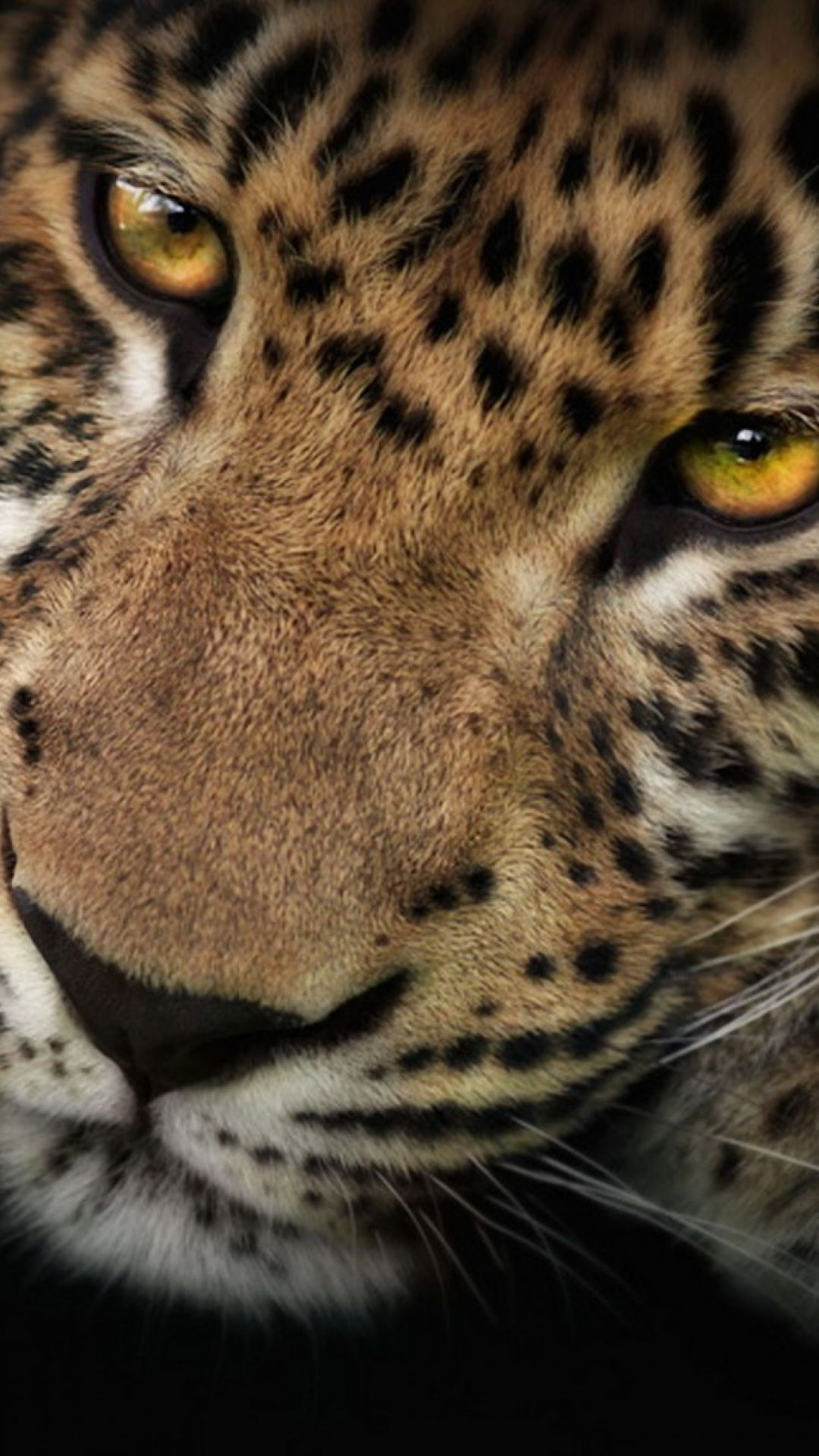 Animal iphone wallpaper tumblr -  Iphone Ios 7 Wallpaper Tumblr For Ipad