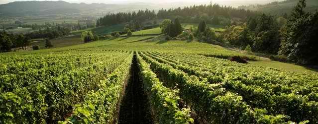 Oregon farmland...