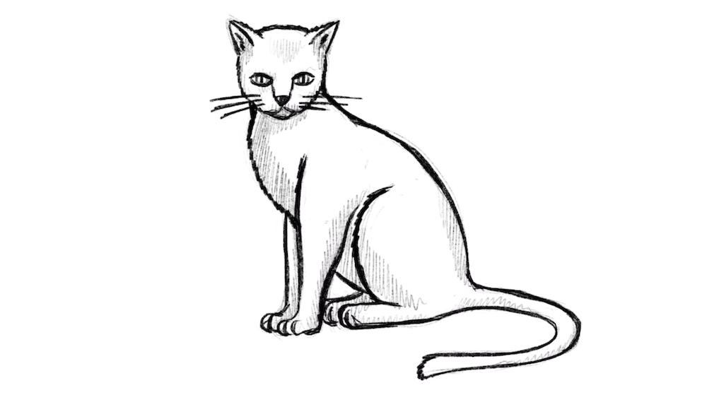 Katze Zeichnen Lernen Ubung Mit Einfachen Formen Video Katze Zeichnen Tierzeichnung Malen Und Zeichnen