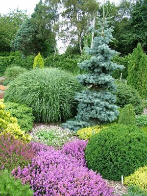 Research conifers Good way to keep SOME of the garden green in the