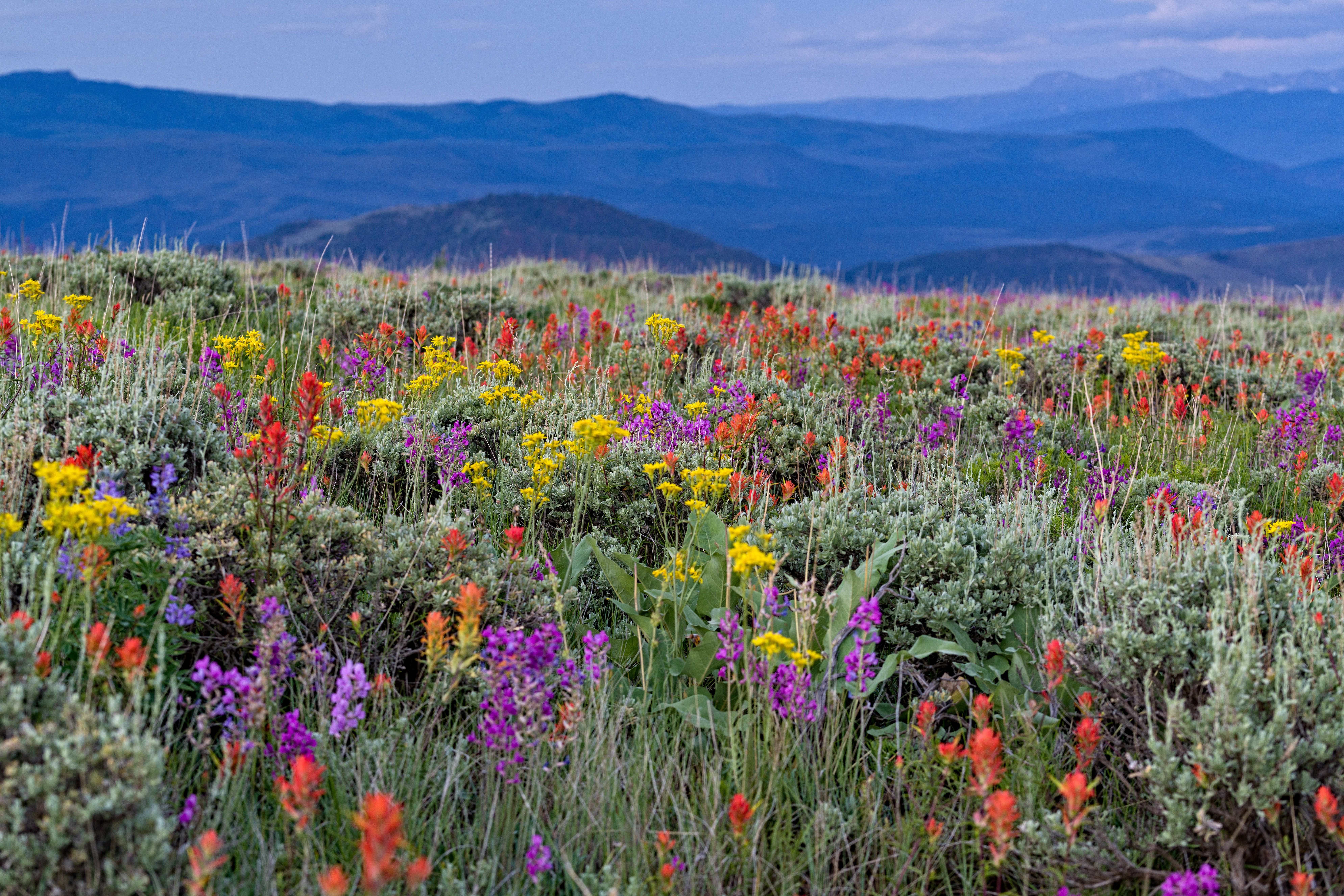 5 Best Places to Spot Wildflowers in Colorado via ...