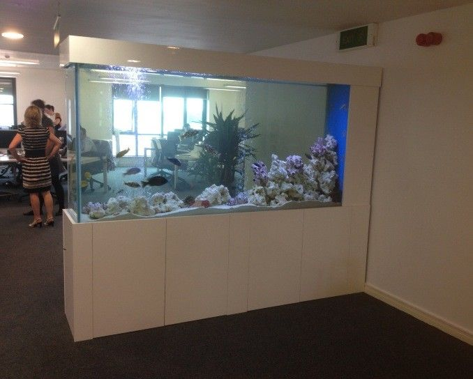 office aquarium. CHEAP LOOKING CABINET TOO HIGH OFF GROUND Image Result For Aquarium In Office