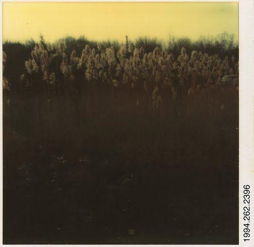 walker evans [polaroids]