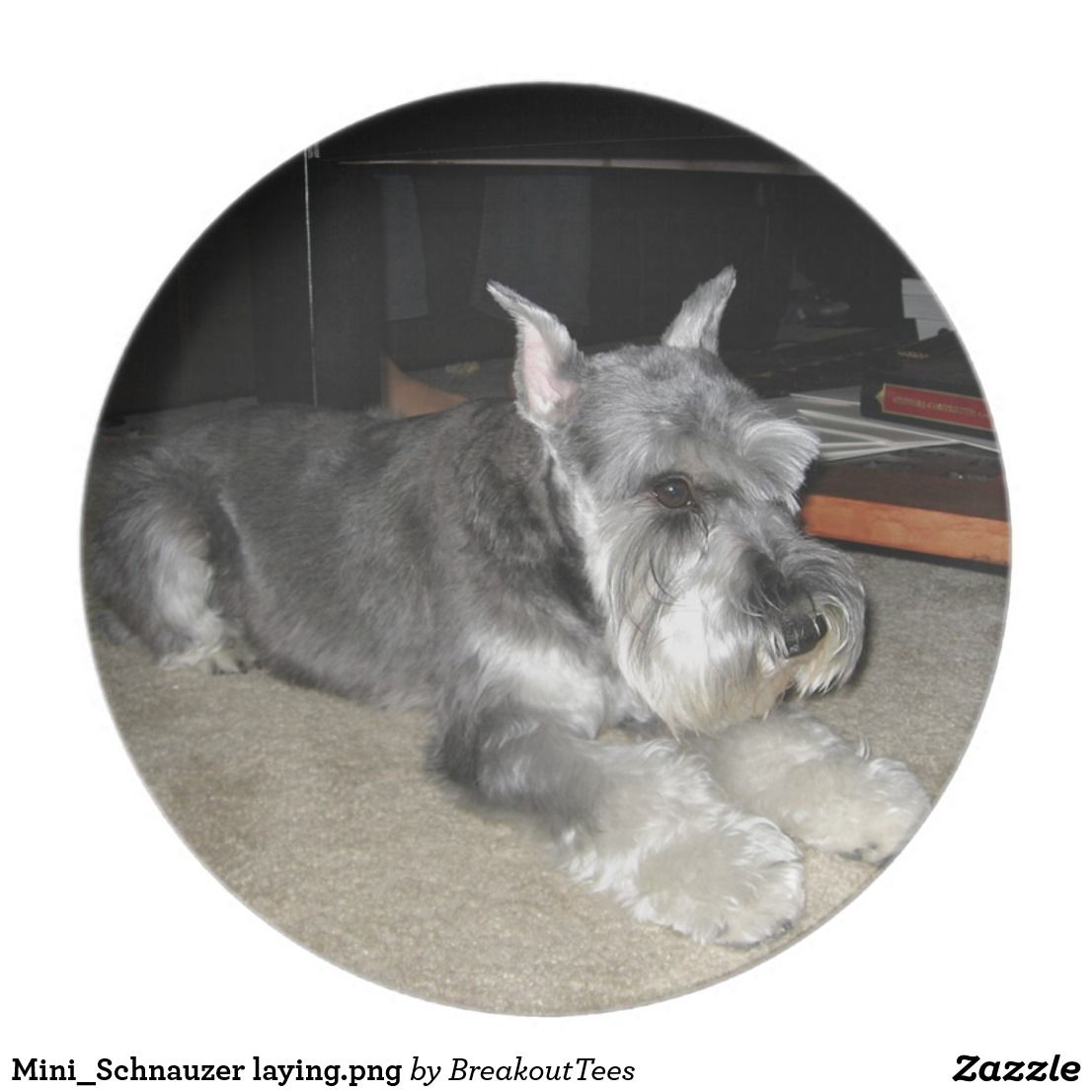 Mini_Schnauzer laying.png Plate