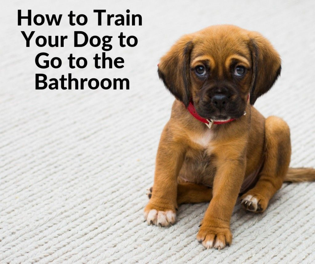 10 Reasons Why Dogs Follow You To The Bathroom Road Trip With Dog Frozen Dog Frozen Dog Treats
