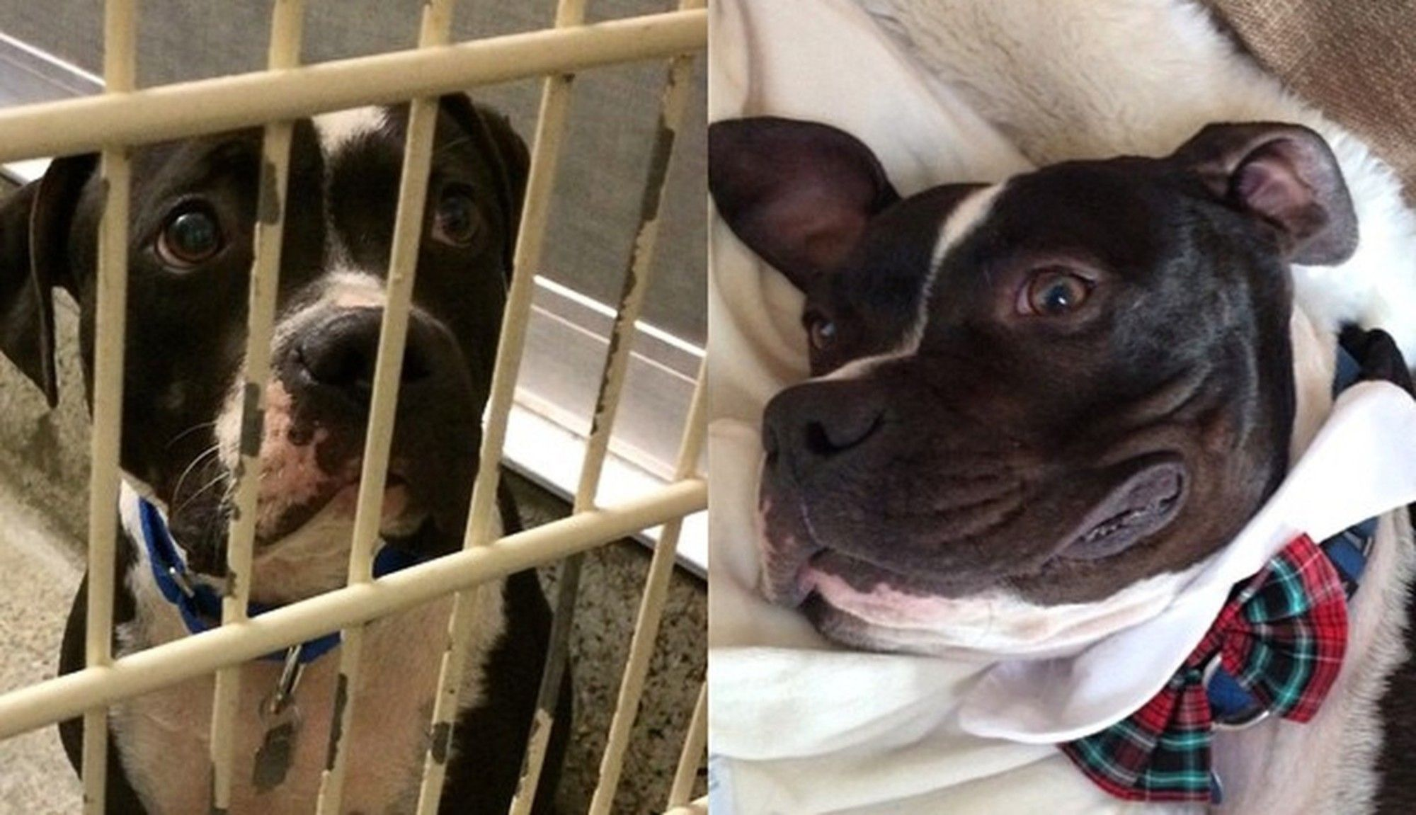 "Before And After s Show What Love Does To Dogs ""Charlie"