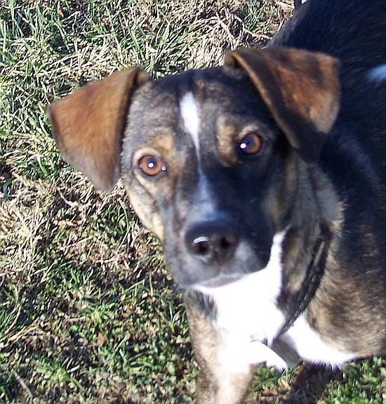 ADOPTABLE DOG OF THE WEEK FRANKLIN COUNTY INDIANA HUMANE
