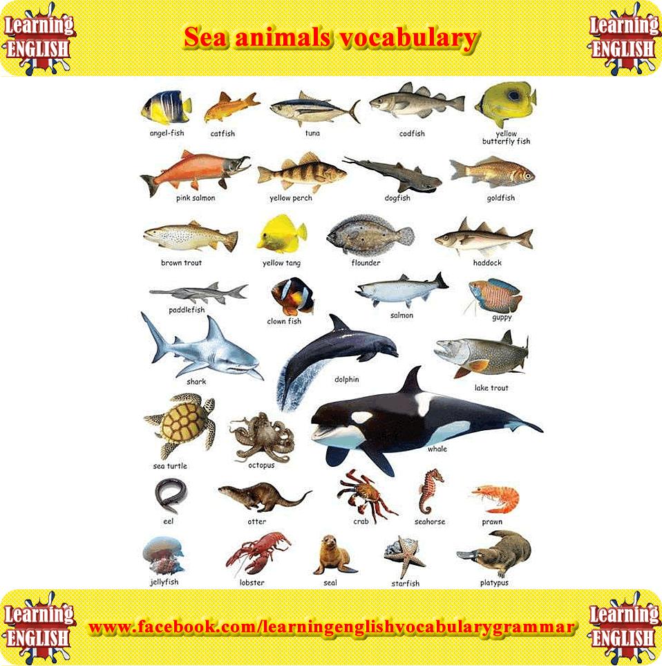 Морские животные в картинках по английски