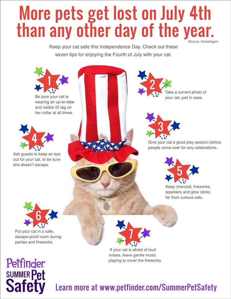 July 4th6th is the busiest time of the year for animal