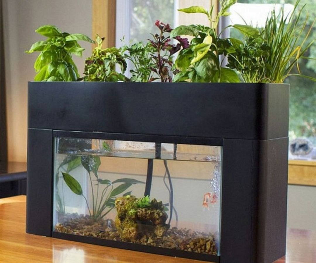 65 Awesome Small Indoor Aquarium Ideas To Make Your House