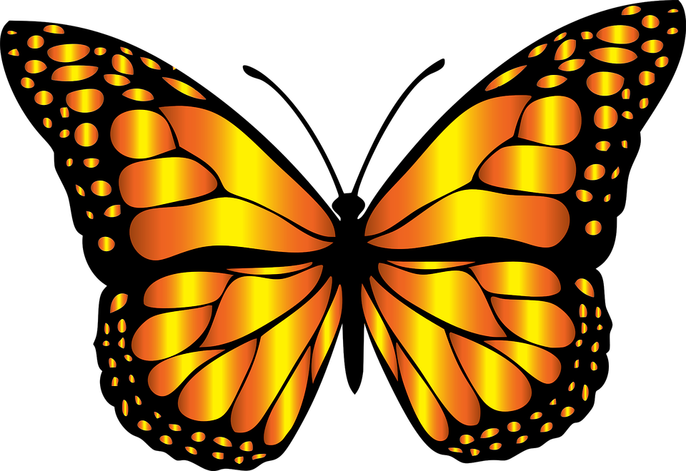 Free Image On Pixabay Animal Butterfly Chromatic Butterfly Clip Art Butterfly Art Drawing Butterfly Pictures