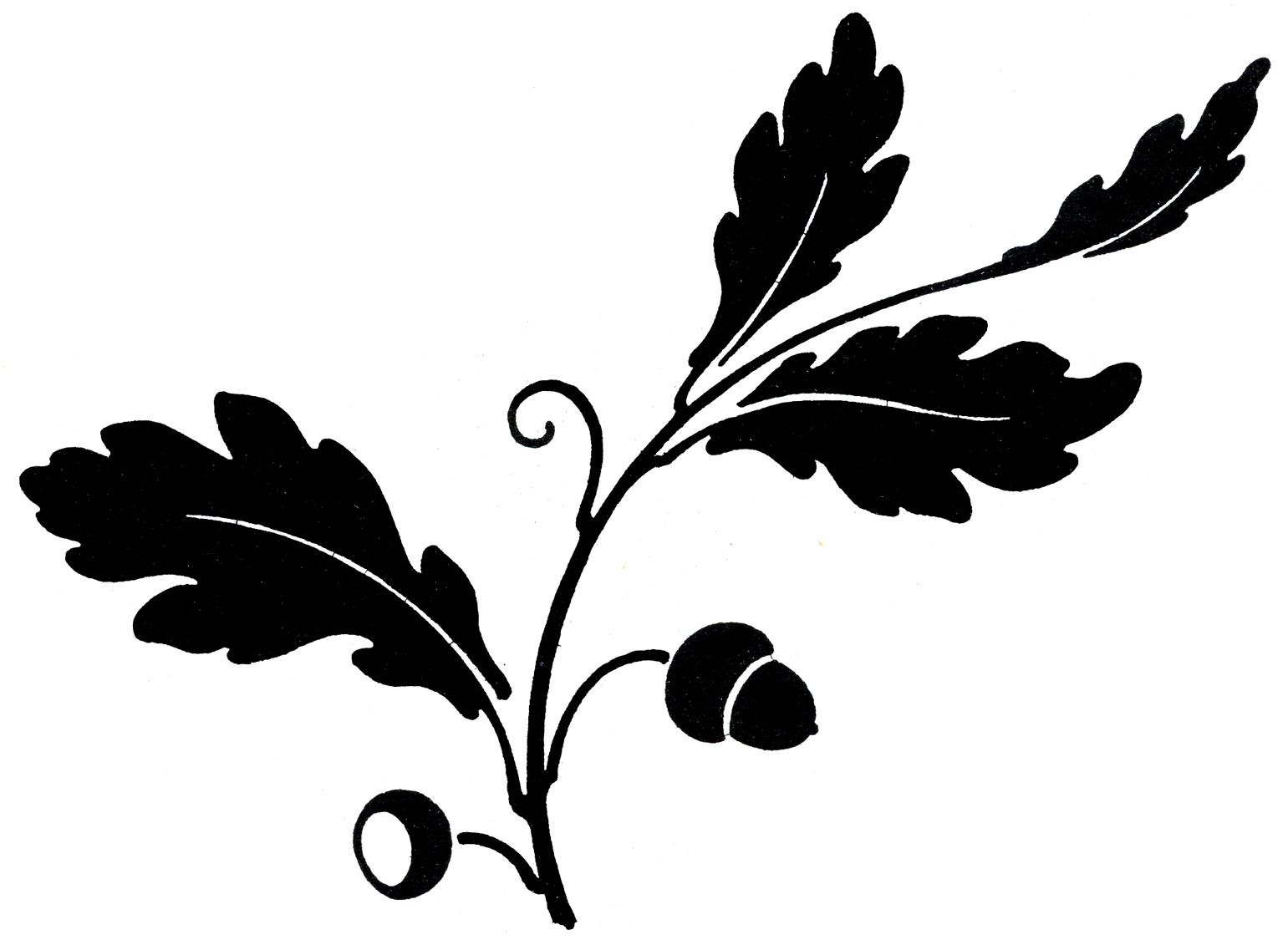 Oak Leaves With Acorns Silhouette Free To Use For Outlining Stencil Or Applique From The Graphics Fairy Leaf Images Leaf Clipart Oak Leaf Tattoos