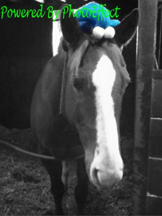 Cookie Monster ha ha