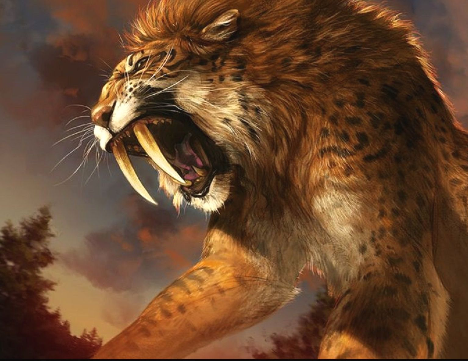 b84196417 Sabertooth cat. About the size of a tiger, but with burlier arms and  elongated fangs, smilodon stalked camels, bison, and other herbivorous prey  across ...