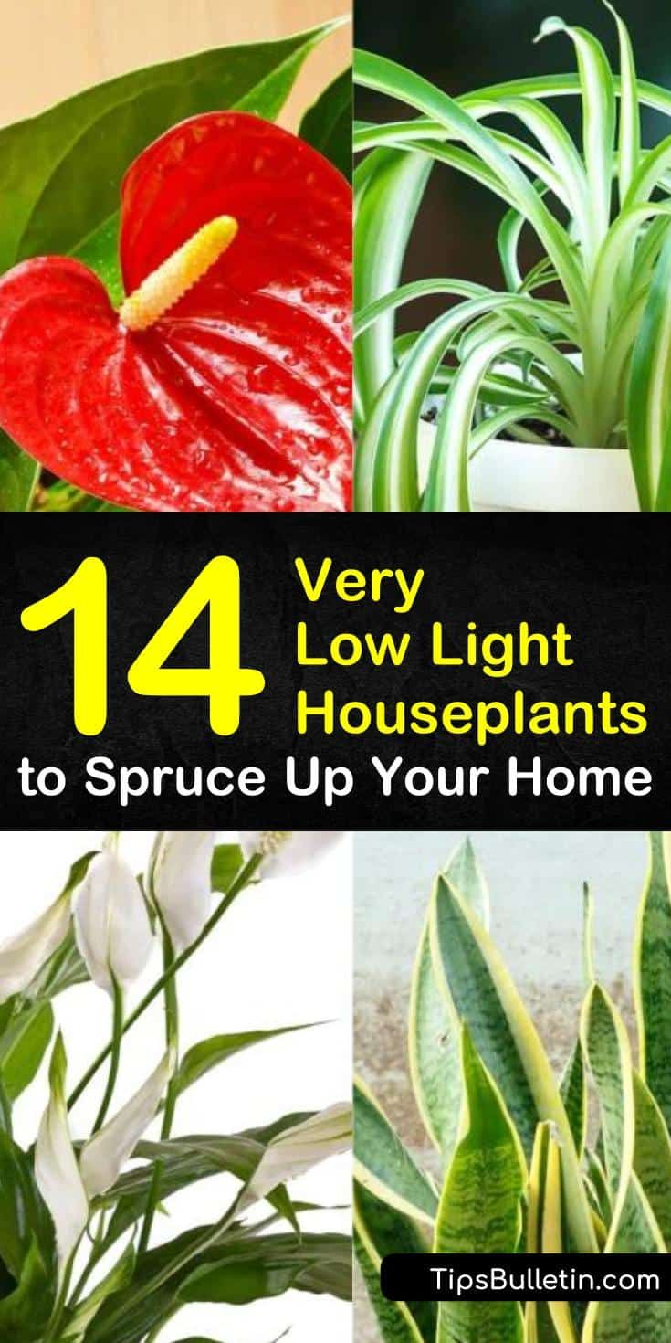 14 Very Low Light Houseplants To Spruce Up Your Home 400 x 300