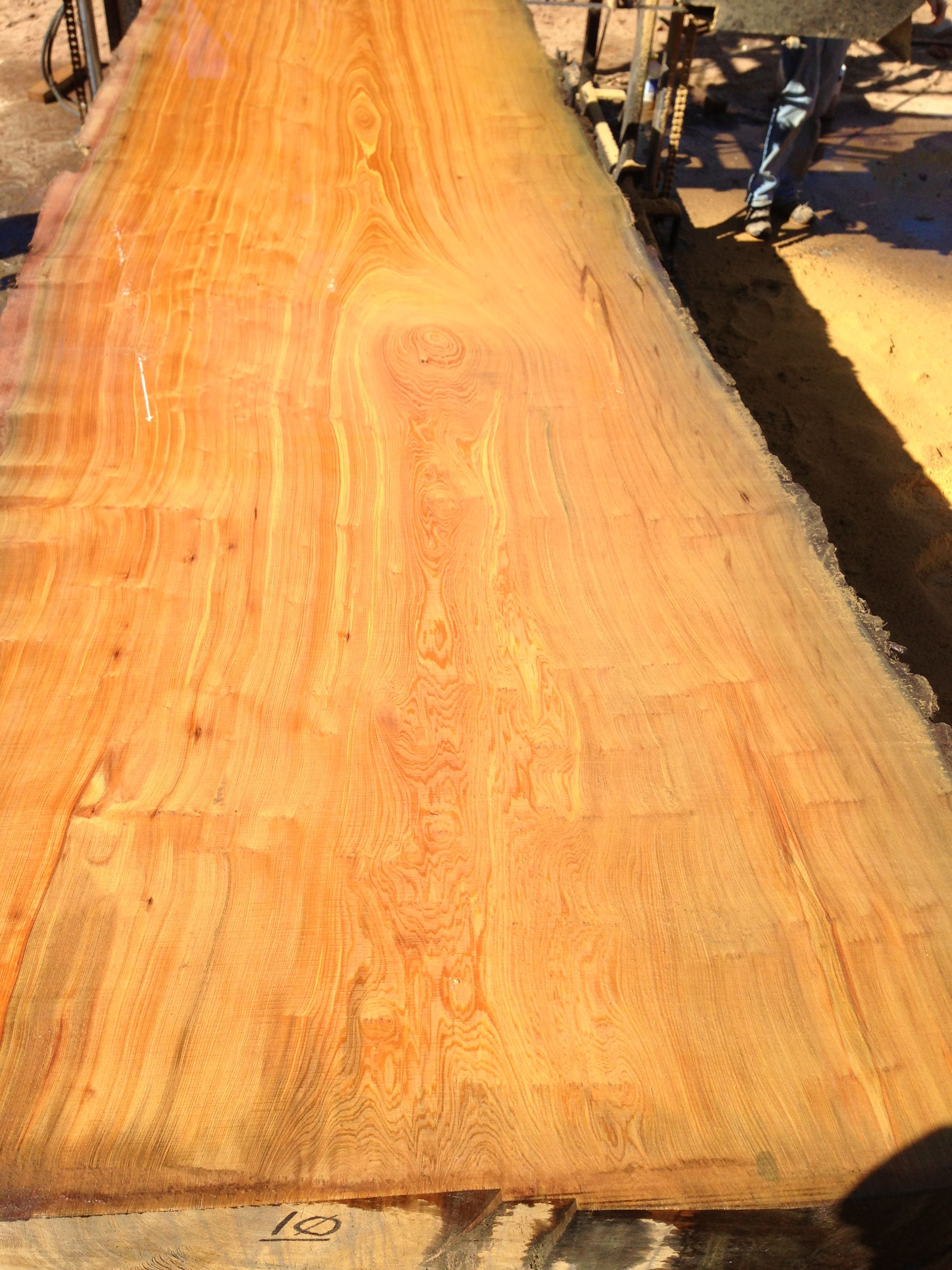 1800 Year Old Cypress Slab Recovered From A Log Buried 50