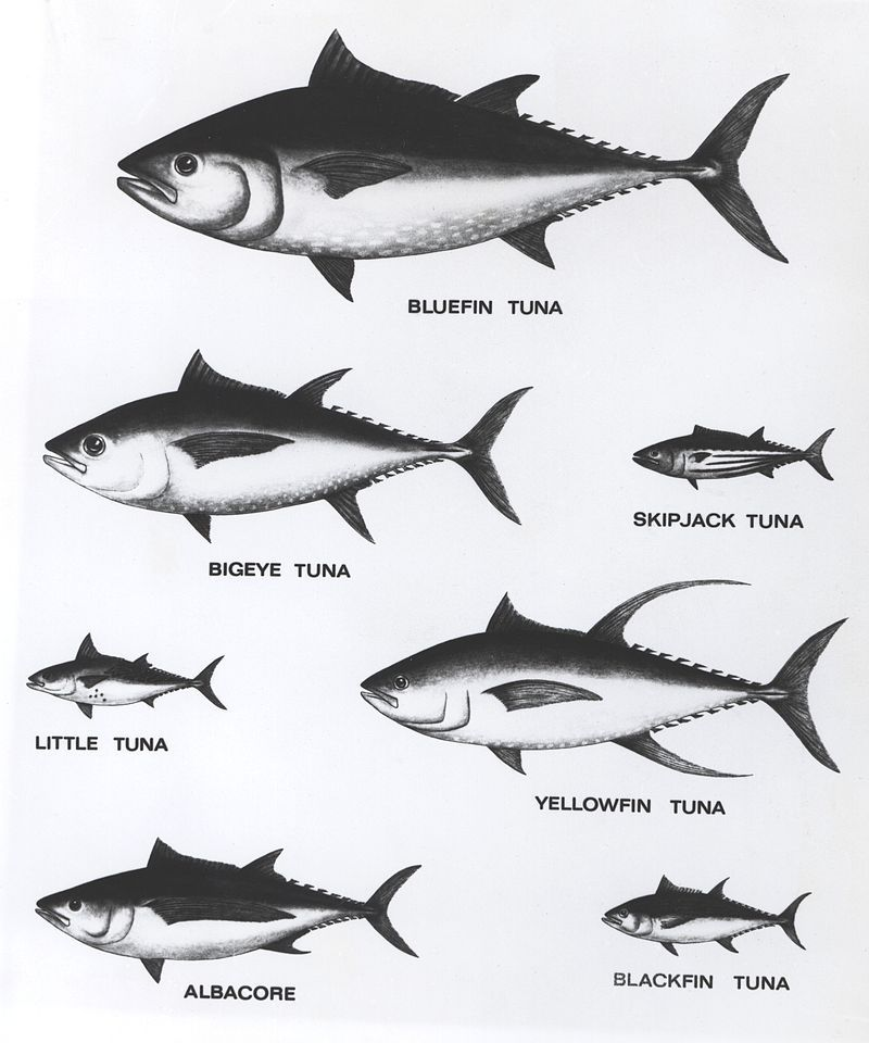 Great tuna chart. www.forklengthfashion.com | Wicked Tuna Boats ...