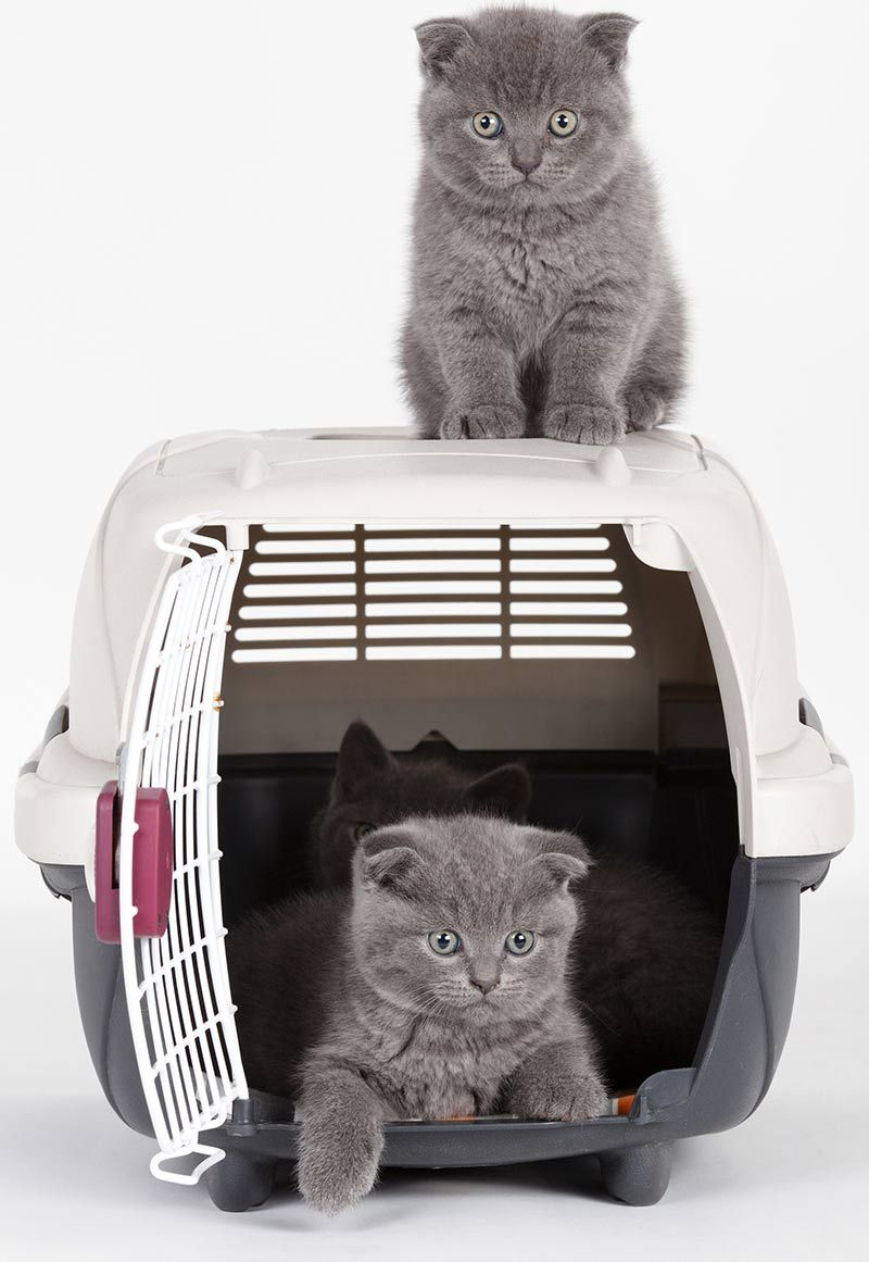 Best Kitten Carrier Reviews And Tips For Making The