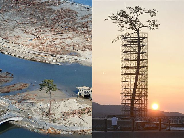 Japan Erects Massive Sculpture of the Last Standing Tree from a Forest Destroyed by 2011 Tsunami