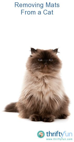 785b13a17d2b00b84e04e07130cef46f - How To Get Rid Of Matted Hair Clumps On Cats