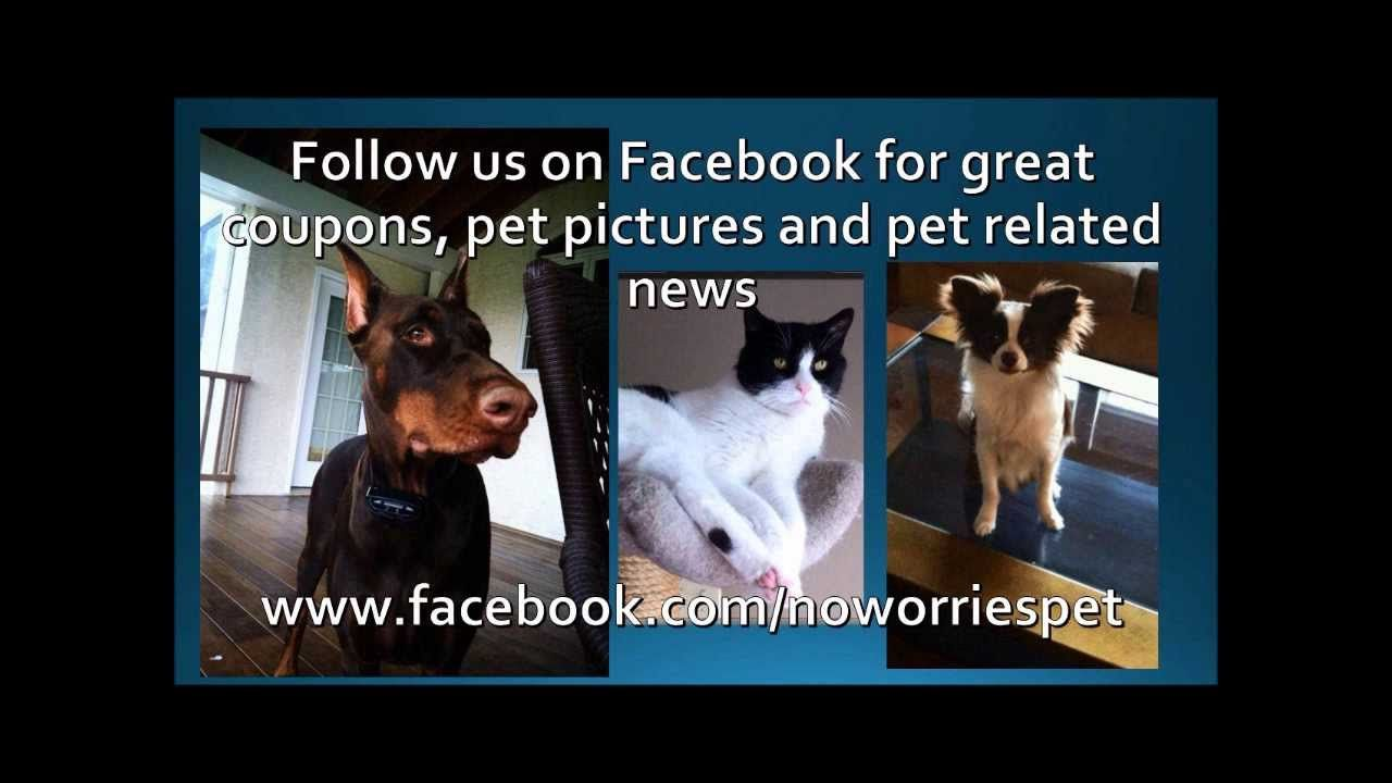 Promo Video For No Worries Pet Sitting Big Dog Care Pet Sitters Best Pet Insurance