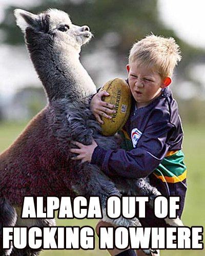 Damn Alpaca!