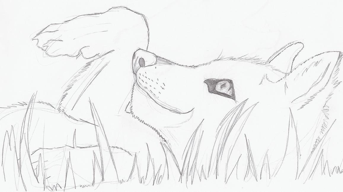 Рисунки аниме животных карандашом поэтапно для начинающих