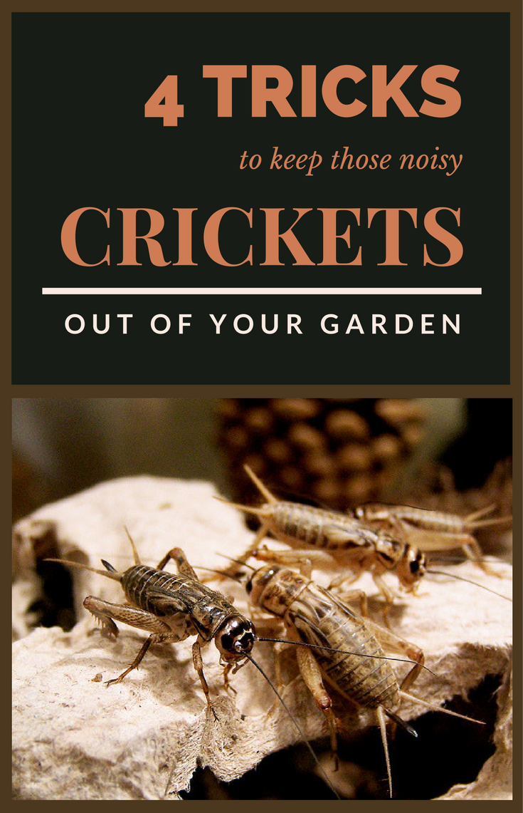 Crickets are become a nuisance if they are many in your garden. They ...