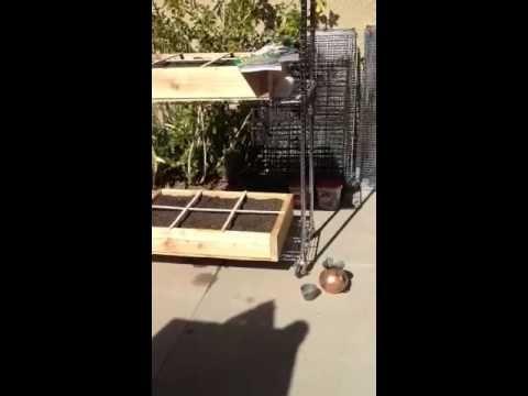 Square Food Gardening U2013 VIDEO U2013 My First Garden (Yippee!) U2013 Post #