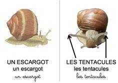 imagier sur l 39 levage d 39 escargots en maternelle imagier de l 39 h liculture maternelle. Black Bedroom Furniture Sets. Home Design Ideas
