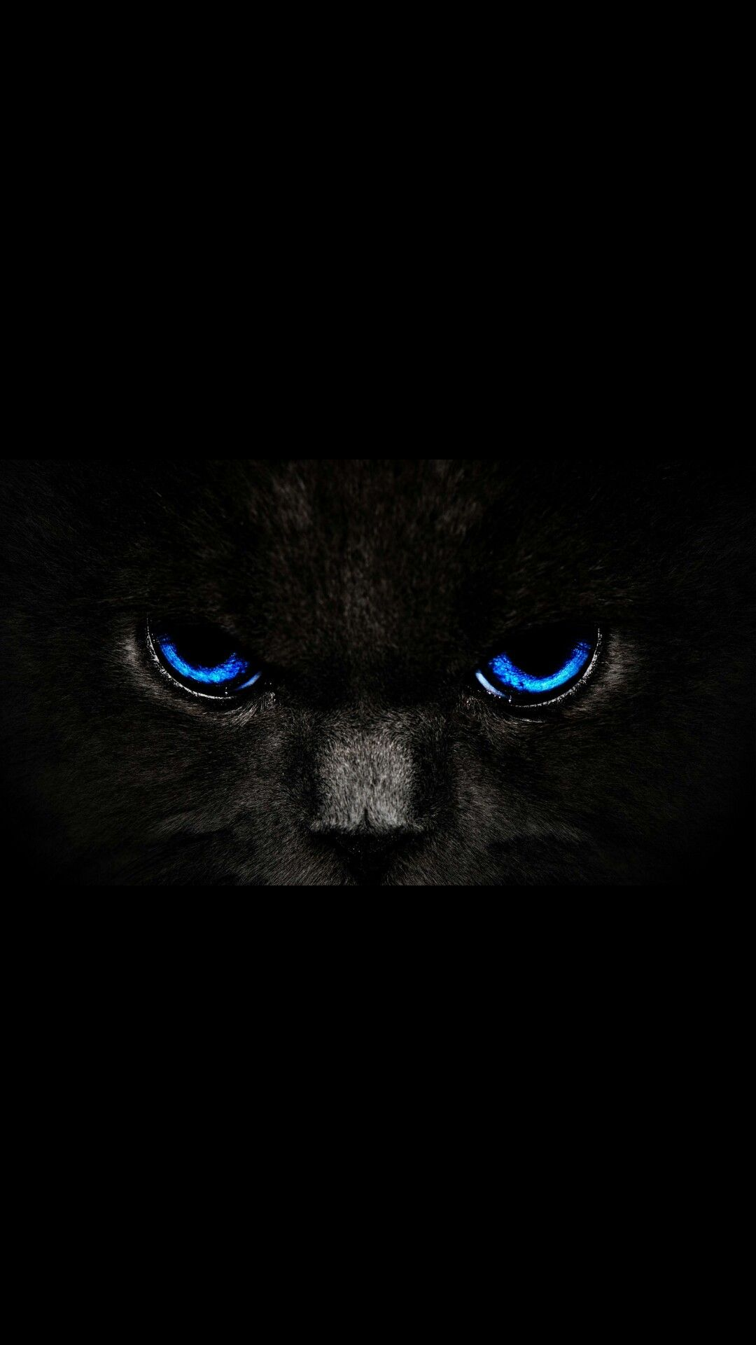 Pin By Chandu On Cats Cat With Blue Eyes Eyes Wallpaper Cat Wallpaper