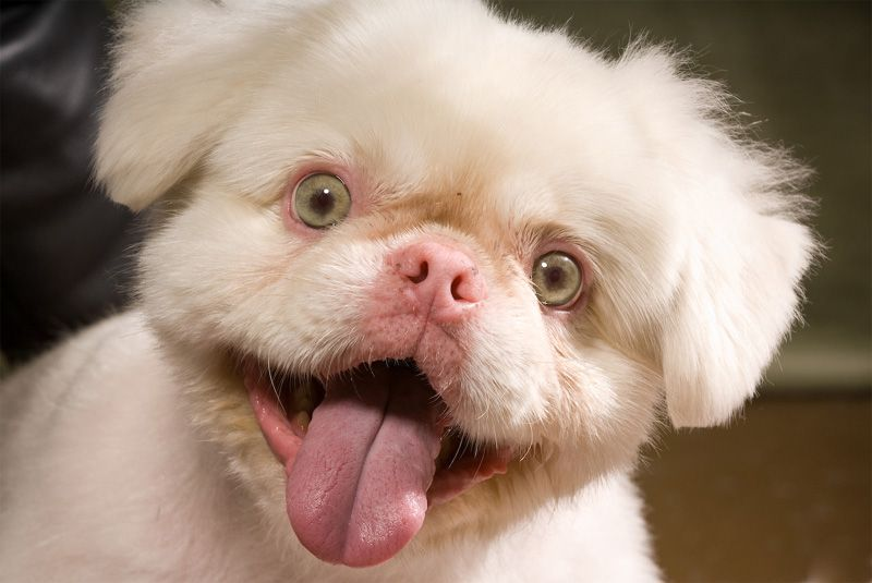 Real Albino Dog Albino Dog Albino Animals Animal Pictures