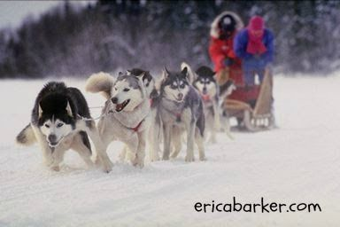 National Sled Dog Day Dogs Best Friends Pets Sled