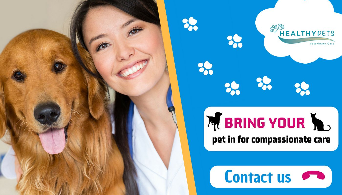 Pet Dental Care Services near Boca Raton, FL Healthy