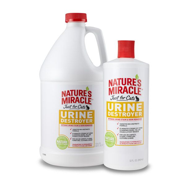 With This Specialized Cat Urine Stain And Odor Remover