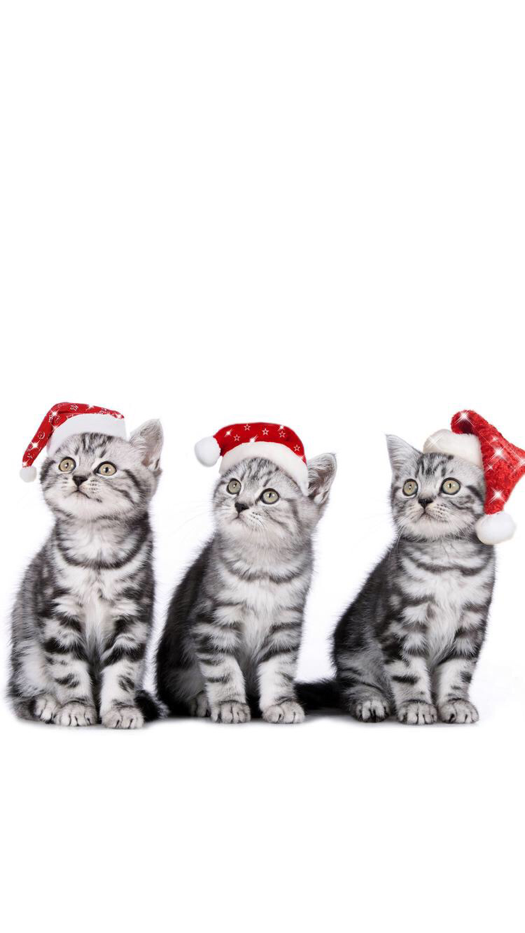 Christmas Kitties Wallpaper For Iphone And Android Cat Wallpaper Christmas Cats Iphone Wallpaper