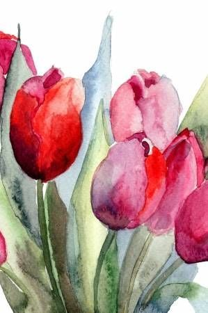 Tulips flowers, Watercolor painting stock photos picture, images and stock photos Tulips flowers, Watercolor painting stock photos picture, images and stock photos