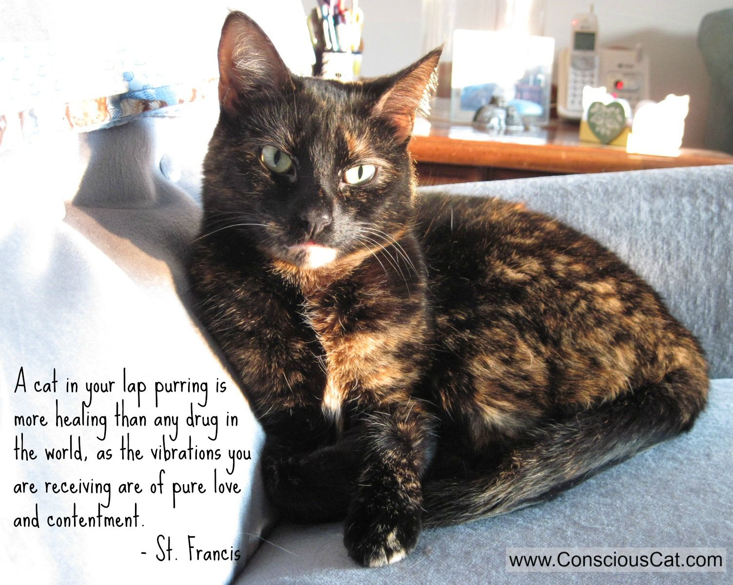 Sunday Quotes The Healing Power of Purring Cats, Cat