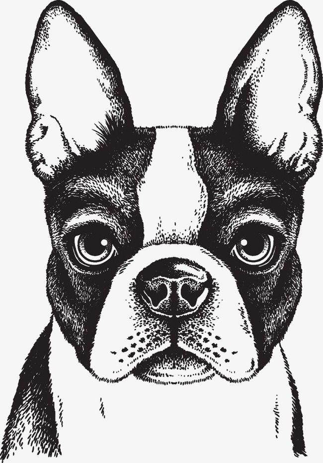 Dog Clipart Dog Dogs Hand Painted Black Image Lifelike Puppy Animal Hand Painted Painted Clipart Pai Boston Terrier Art Boston Terrier Illustration Dog Drawing