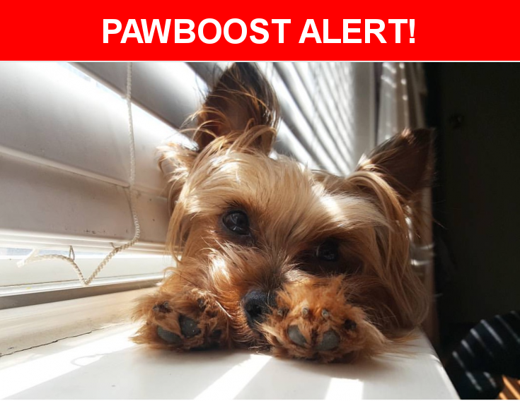 Please spread the word! Brutus was last seen in Arlington, TX 76018.  Description: Male yorkie. spayed & very friendly/playful. We last saw him in our backyard. sublet/silo closest cross street. please contact us if found. He is adored by our 2 year old   Nearest Address: Arlington, TX 76018, United States