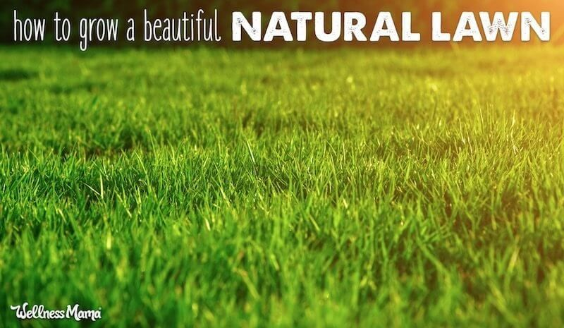 How To Grow A Beautiful Lawn Naturally Organic Lawn Care Lawn