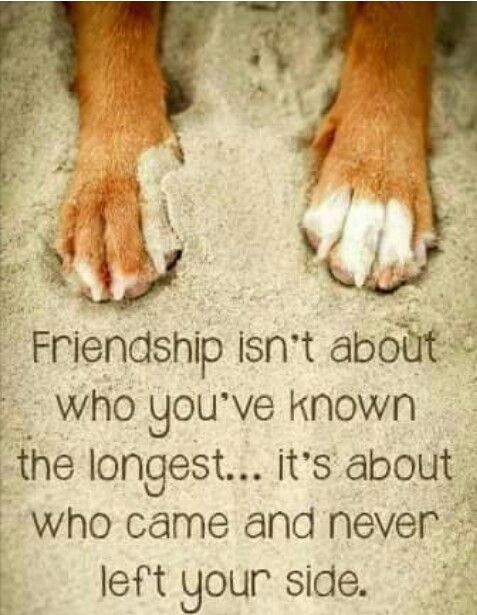 Pin By Emmarue Ibanez On Dogs Rule Dog Quotes Love Dog Quotes Dog Poems