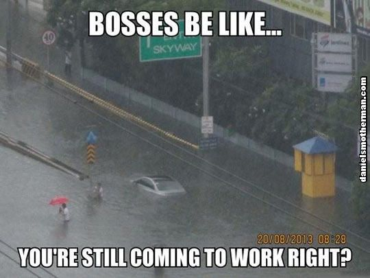 Bosses Be Like You Are Still Coming To Work Right Funny Flood Swallows Car Funny Quotes Funny Friday Memes Friday Humor