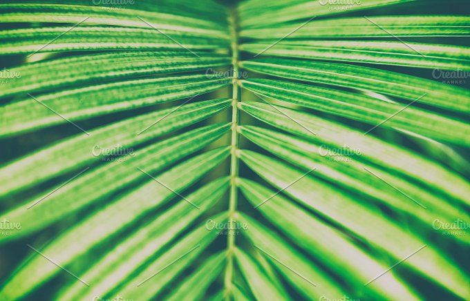 Palm Leaf Leaf Photography Tropical Background Palm Leaves Animal life video close up shot of new born bird. palm leaf leaf photography tropical