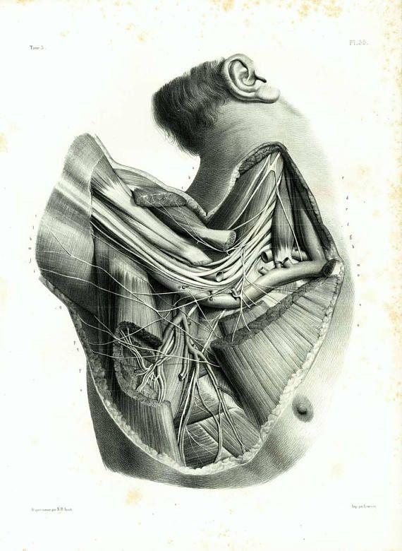 1831 XL Shoulders muscles Print, Axilla Muscles UnderarmOxter Armpit Antique Anatomy Print, Human Poster Bourgery Medicine Wall Art 786288ccd2e5ef09f43e71f75079b9e5